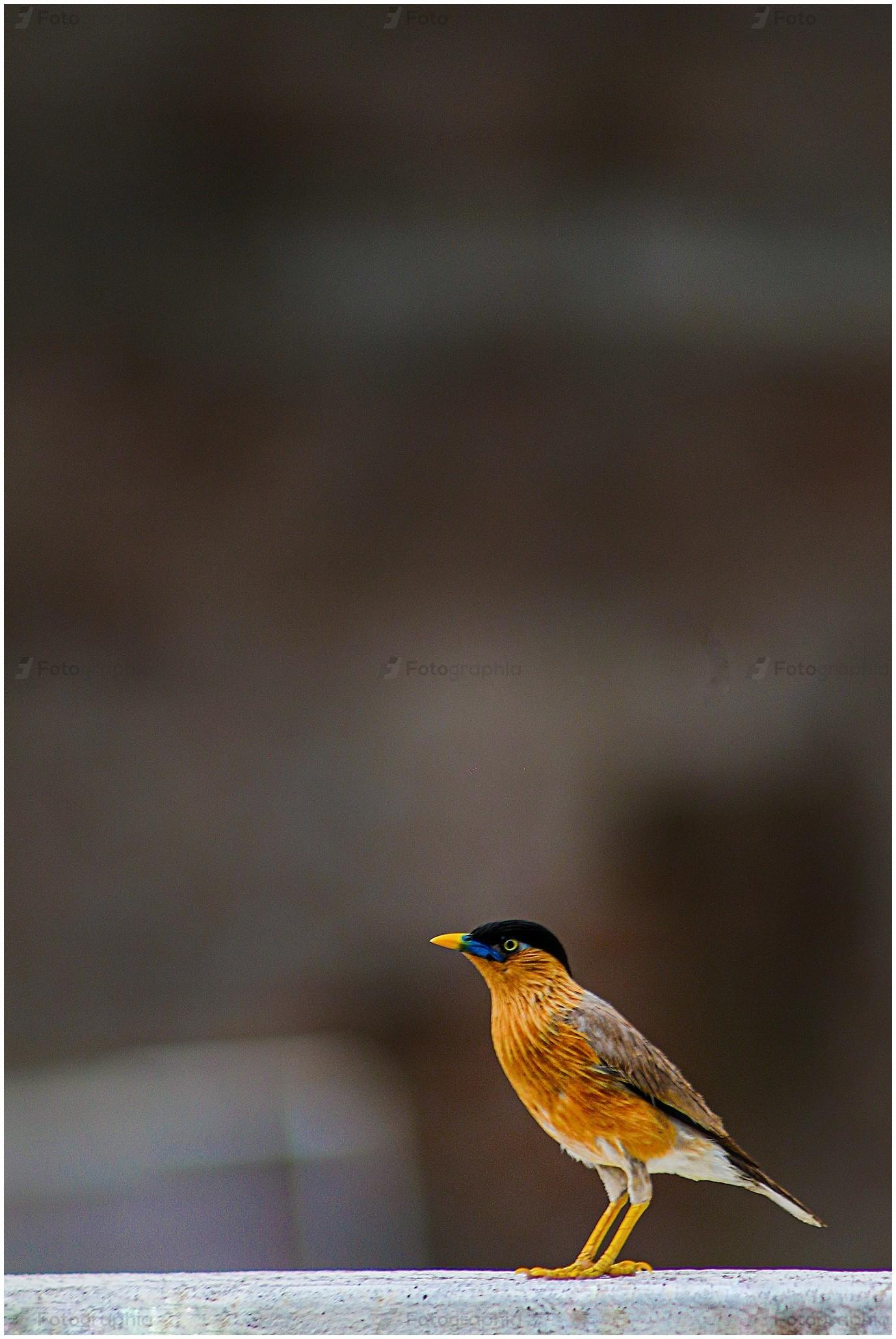 Krishnapal Photography